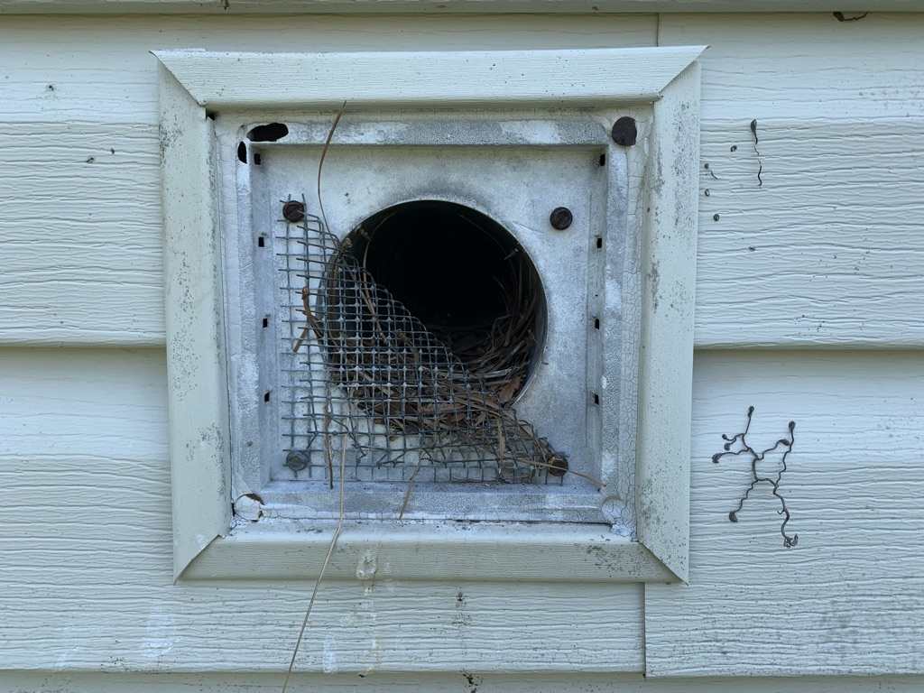 another bird nest in dryer duct
